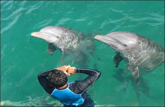 Swimming with Dolphins and More at Isla Mujeres