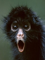 Spider Monkey received the news about the airport.