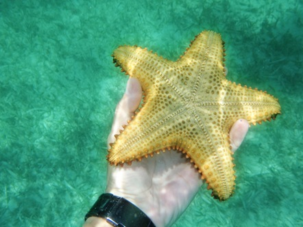 A starfish in my hand.