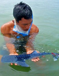 Whale Sharks are strongly protected in the Phillipines