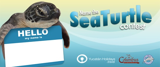 Name the Sea Turtle Yucatan Holidays Contest