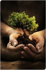 Reforestation in Mexico